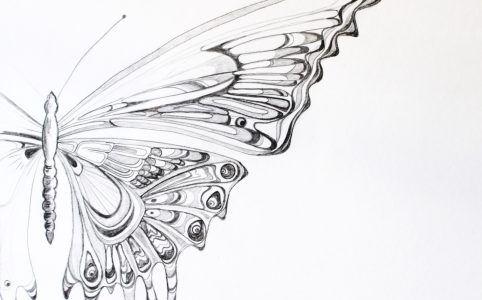 Skizze Schmetterling