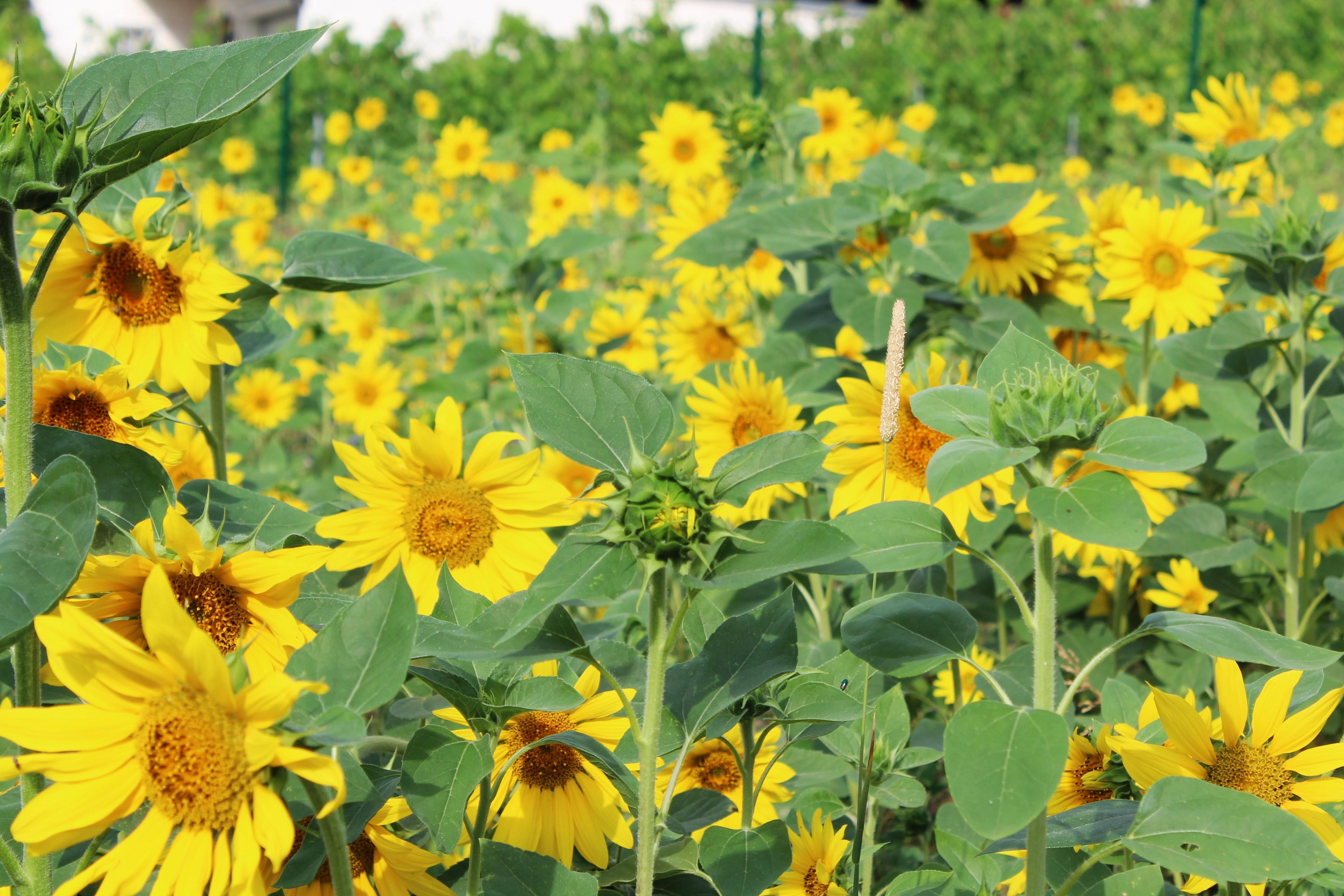 Blumenwiese anlegen Erfahrung